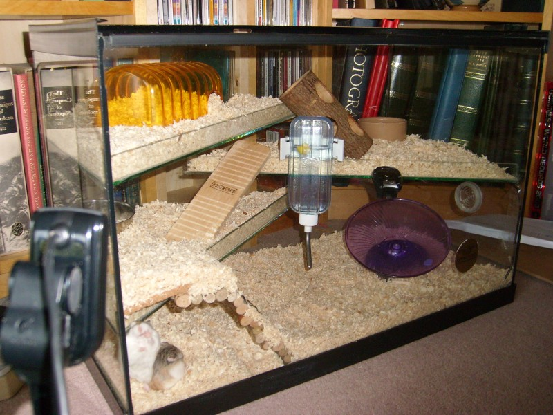 A nicely setup fish tank pics for Fish tank for hamster