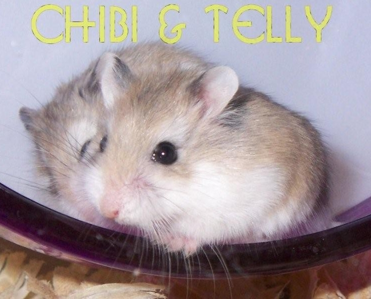 Chibi and Telly